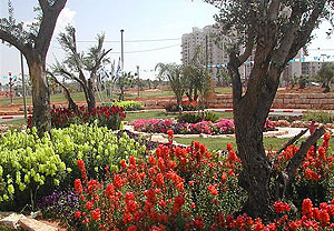 Ч'Ч'ЧўЧЄ Ч©ЧћЧ•ЧђЧњ. Photo: