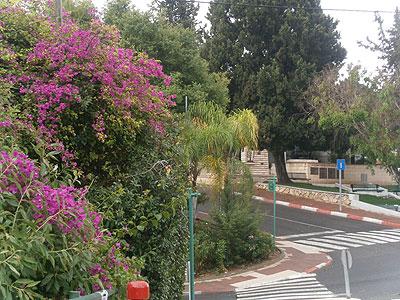 Йокнеам. Фото: Netzah.org