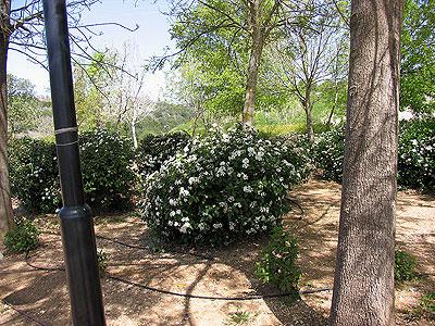 Маалот-Таршиха. Фото: Netzah.org